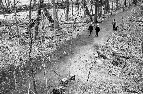 Lake Roland trails